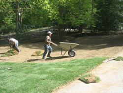 Landscaping Maintenance Wayne