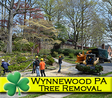 Wynnewood PA Tree Removal